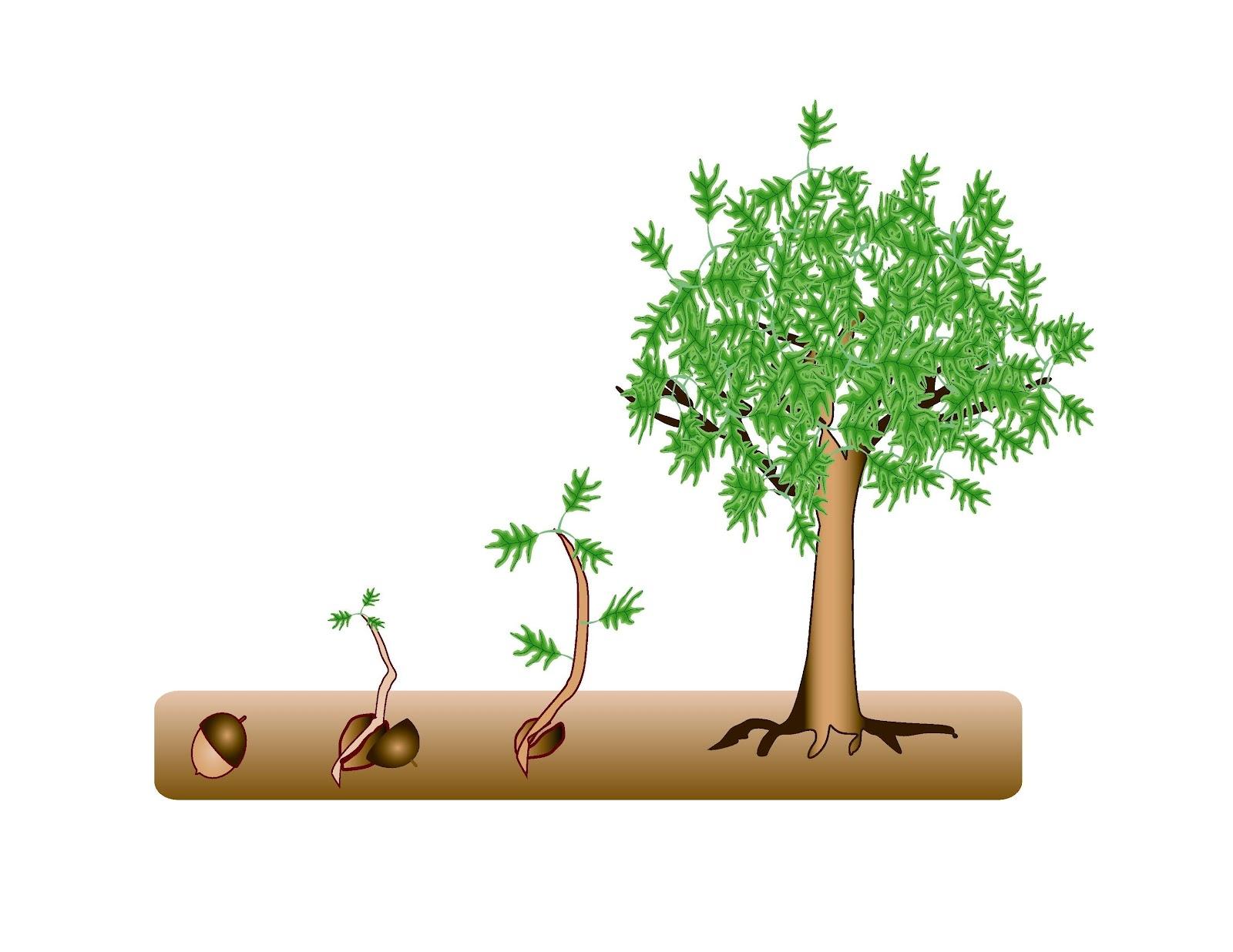 Perry SWCD 2021 Tree Sale
